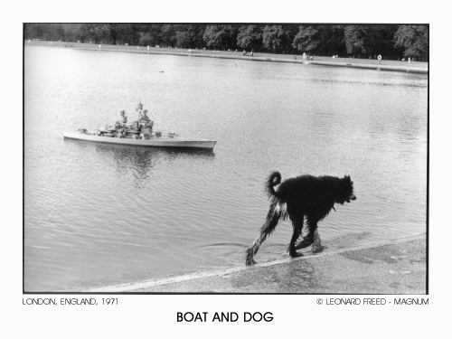 Boat And Dog